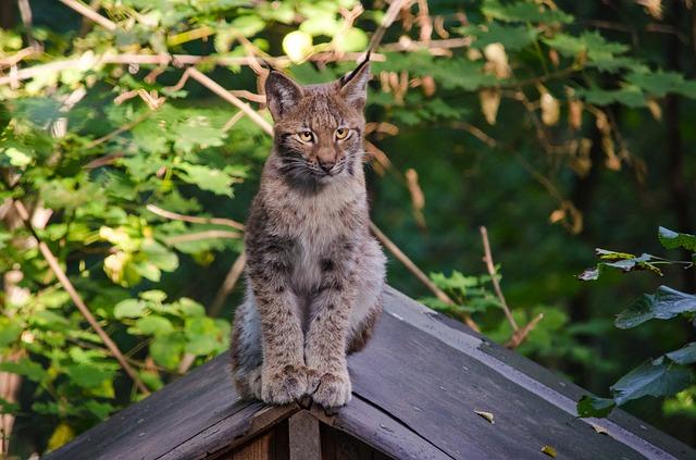 Les chat aime grimper et découvrir, le collier GPS vous aide à les retrouver