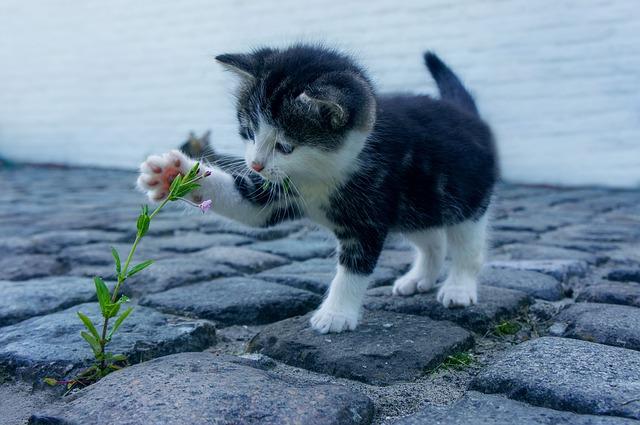 La solution contre les chats perdus ? Le collier GPS chat